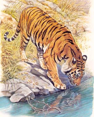 Набор алмазной вышивки Алмазная живопись Тигр у реки / АЖ-1523