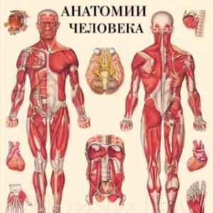 Атлас АСТ Большой атлас анатомии человека