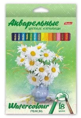 Набор акварельных карандашей Hatber Букет / BKa-18370