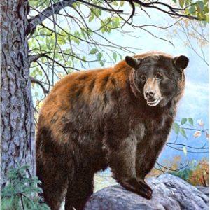 Набор алмазной вышивки Wizardi Бурый медведь / WD083