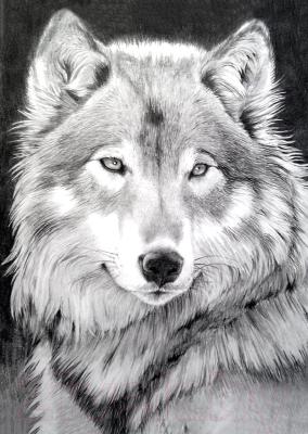 Набор алмазной вышивки Wizardi Серый волк / WD086