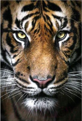 Набор алмазной вышивки Wizardi Вождь тигров / WD2395