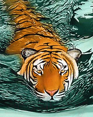 Набор алмазной вышивки Wizardi Тигровые воды / WD2413